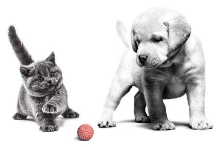 Royal Canin helpt jouw bij de belangrijkste momenten in het leven van jouw puppy of kitten